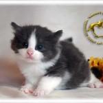 baby062909-0530-04-01