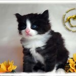 baby062909-0530-05-04