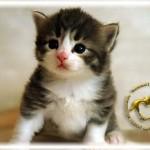 baby062909-0608-01-03