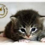 baby062909-0608-03-02